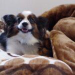荻原規子の学園ファンタジーに加わった「エチュード春一番:第一曲 子犬のプレリュード」